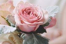 ✿ Roses ✿ / Vakkert/Beautiful