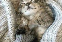 Warm & Cozy / Varmt og koselig