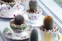 - Cactus -