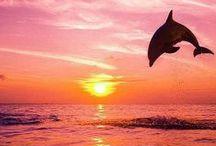☀ Sunset ☀ / Solnedgang
