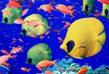 ~ Life under the sea ~