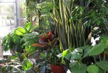 Indoor Gardening / Houseplants and terrrariums plus other projects to keep your thumbs green year round.