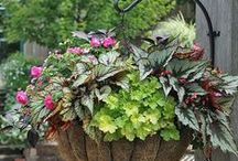 Container Gardening / Containers and beautiful plant combinations to fill them.