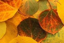 Fall Wonder / Decorating ideas and inspiration for your garden and outdoor living spaces.