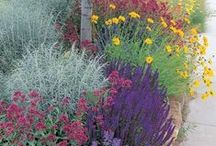 Pure Perennials. / Perennials for cold climates and the Rocky Mountain region.