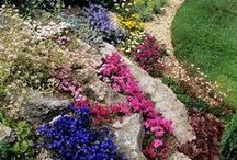 gardening,plants, flowers, trees