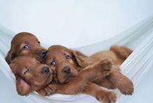 Honden/Dogs / Honden Rassen van over de hele wereld.