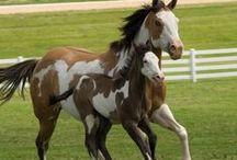 Paarden-Horses / Prachtige foto,s van paarden