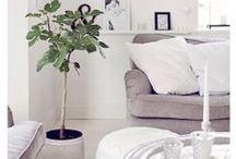 - Vijgenboom - / Vijgenboom inspiratie voor binnen. Fig tree inspiration