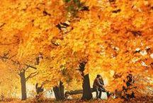 Autunno / La stagione dei colori. La natura inizia a riposare in attesa di una nuova stagione. E bisogna rispettare i suoi ritmi.  Oggi, domani, sempre.