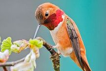 Hummingbirds / Beautiful and colorful