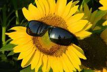 ☼✿  Sunflowers ✿☼