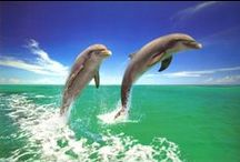 *♡**♡* Dolphins *♡**♡* / I love Dolphins