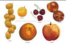 FLE: Nourriture - fruits et légumes