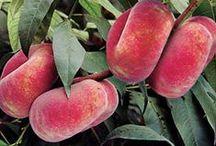 Fruit Trees & Vines