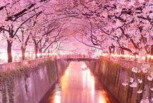 Sakura Matsuri / Up Up and Away on a Japanese Adventure