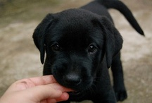 Awwwww....So cute!! / by Lindsay File