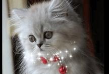 Kitty, Kitty..Purrrrrrrrrrrrrr~~~~~~~~ / by Joan Ruch