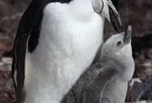 Smile! Penguins! / Love these birds.