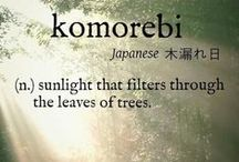 Komorebi / One efficiently evocative Japanese word for the magic that occurs under trees and in forests as a result of the light filtering through the foliage; the interplay of light and leaves.