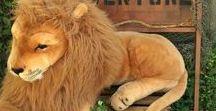 Jungle/Lion King shower