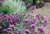 taras, ogród / zieleń, kwiaty, stoły, krzesła, fotele, drewno, płytki