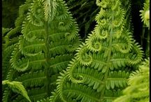 Fern Society / to show the beauty of nature...