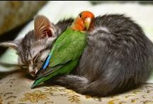 Animaux / Tout les animaux trop chou <3