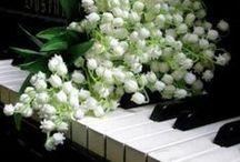 Pansies & Lily of the Valley / Mughetti - Mughets - Maiglöckchen