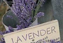 Love Lavander / Lavanda - Lavande - Lavendel