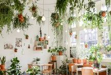 Plantspiration / Foliage and greenery and plants, oh my! Fresh foliage is on-trend and oh-so-stylish #natureinthehome