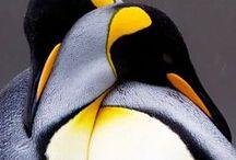 Seals & Penguins