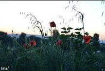 Fleurs & arbres