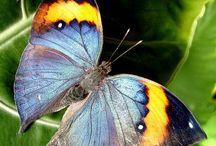 Maravilhas da Natureza / Natureza e suas belezas naturais.
