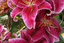 A beleza das flores. / Flores Belas e aromáticas