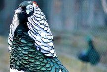 Pássaros exóticos / Pássaros maravilhosos do mundo inteiro!