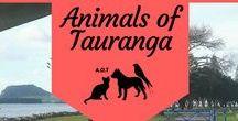 ~ ANIMALS OF TAURANGA ~ / Find interesting bonus content here that may not have reached the AOT timeline yet. #planetlozz #AOTauranga #dogs #cats #pets #pethealth #animalhealth #pethacks