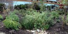 Before and After Rain Garden