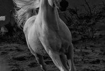 Animals - Horse ^^