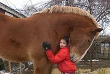 ^//*Horse Breeds*//^