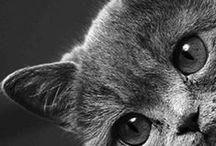 Gatos / Criaturas que me fascinan