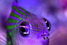 Under the sea....