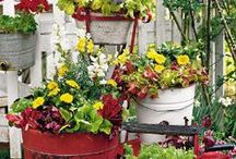 Gardening & Flowers / by Jane A Havens