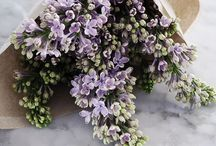 Flowers and gardens / Floral and garden love