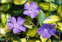 Shady goings on! Beautiful plants for any shady areas of your garden / Shady characters to brighten up even the gloomiest parts of your garden