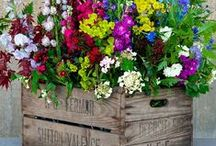 Going potty - great plants for growing in containers / The best plants to keep in pots around your garden