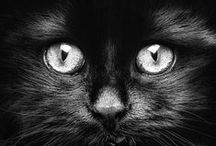 black cats / In loving memory...