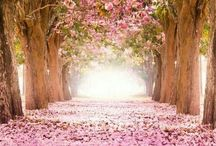 I think pink