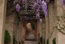 Garden Beauty / Inspiration for a beautiful garden.