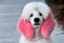 Color & Creative Grooming / Great color, creative grooming examples on dogs and cats, and fun accessories